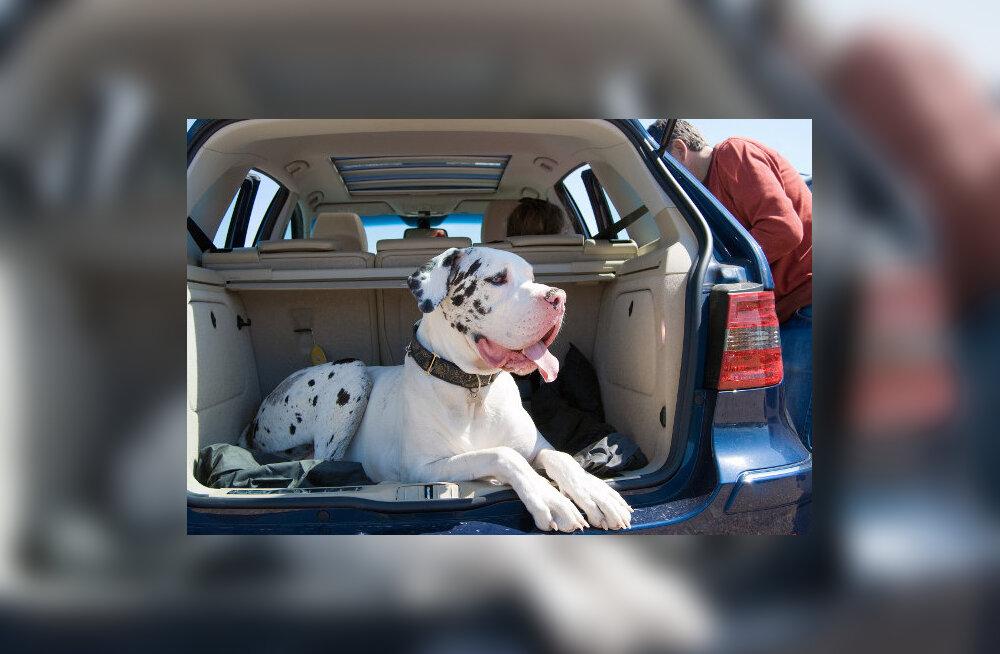 Naine sõidab maha tuhandeid kilomeetreid ja kulutab väikese varanduse, et oma koer Tenerifele puhkama viia