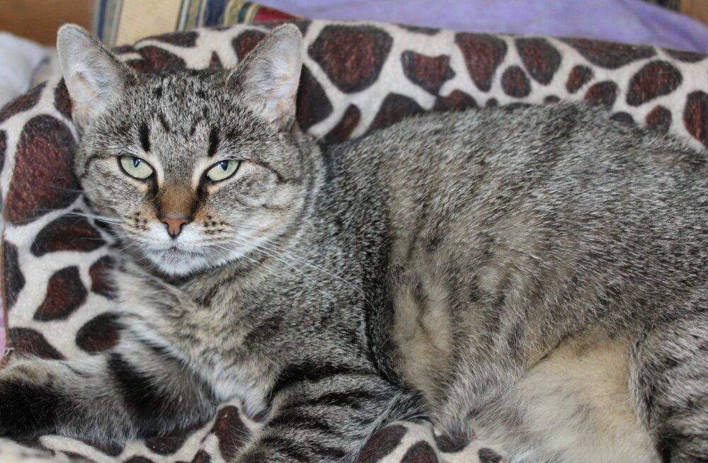 Tikri lugu   Hukkamise eest pagenud kass vajab ravi kopsuhaiguse vastu