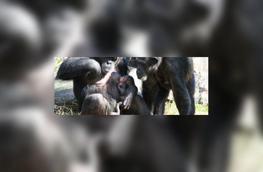 Primaatide arengut tõukasid tagant vulkaanipursked?