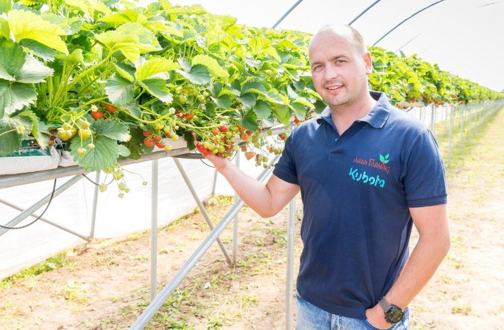 """""""Tõin välismaal õpitud uudsed aiandusvõtted Eestisse,"""" räägib Paavo Otsus oma tunnelkasvuhoones."""