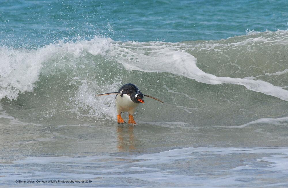 Vaata pilte! Maailma naljakaimate loodusfotode võistlus sai võitjad