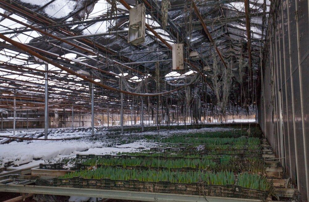 Suurpõleng Nurmiko aianduskeskuses