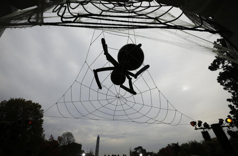 ФОТО и ВИДЕО   В США гигантский паук оккупировал дом. Он пугает детей, которые выпрашивают конфеты к Хэллоуину