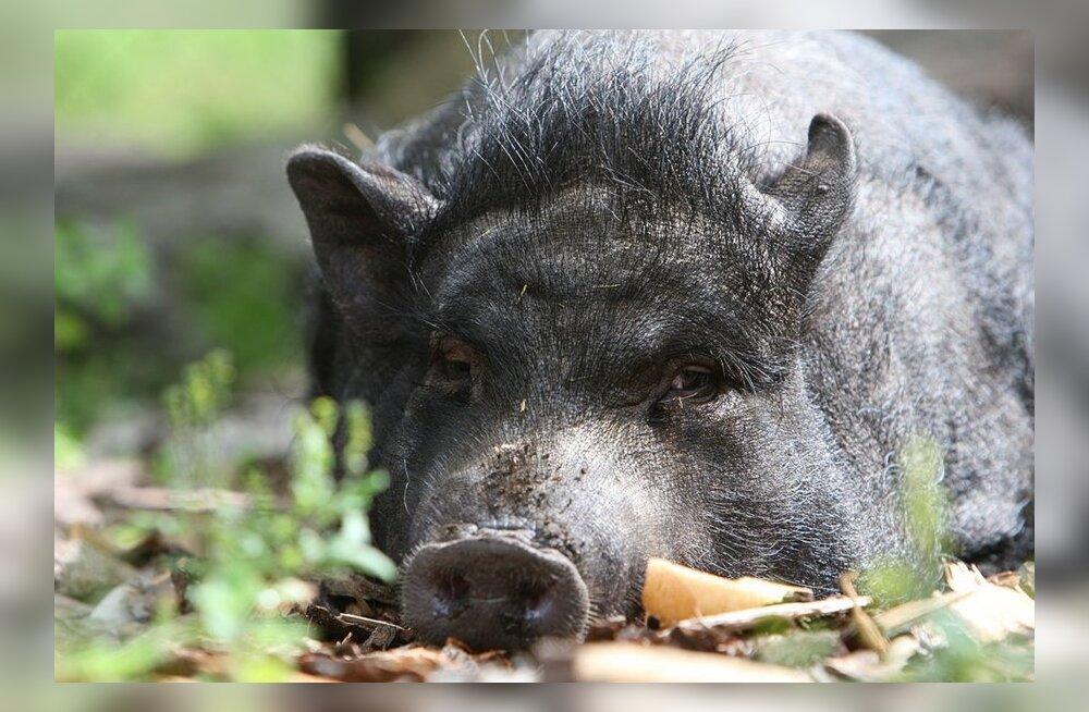 15 vahvat fakti loomariigist: millise looma orgasm kestab 30 minutit?