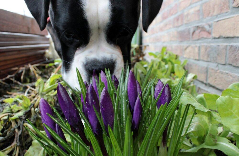 Saladused, mida peidab endas koera nina: 5 huvitavat fakti, mida sa varem ilmselt ei teadnud