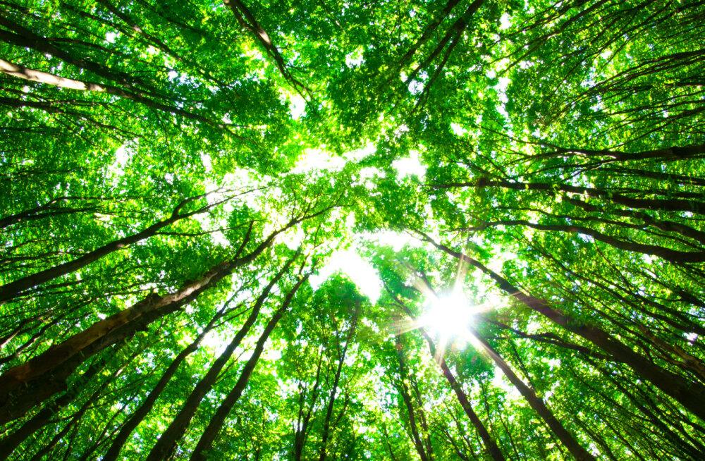 Teadlased: kliimamuutusi saab pidurdada miljardihektarilise hiidmetsaga