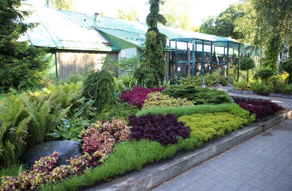 Verilehikud lisavad peenrasse kauneid värve ja aitavad ka teisi taimi esile tuua.