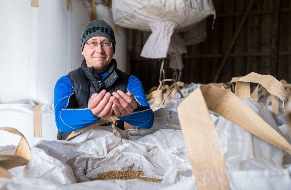 Erik Paalman alustas viie aasta eest seemnevilja tootmisega ning on selles osas kujunenud tugevaks tegijaks.