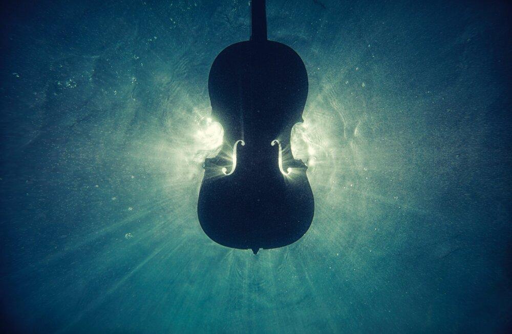 Счастливый случай! В Тульской области найдена скрипка Страдивари