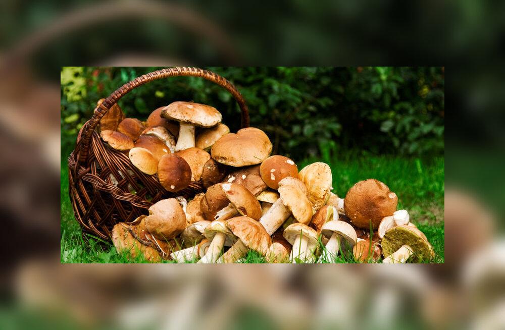Постояльцы из России засолили грибы в ванне элитного отеля в Швейцарии