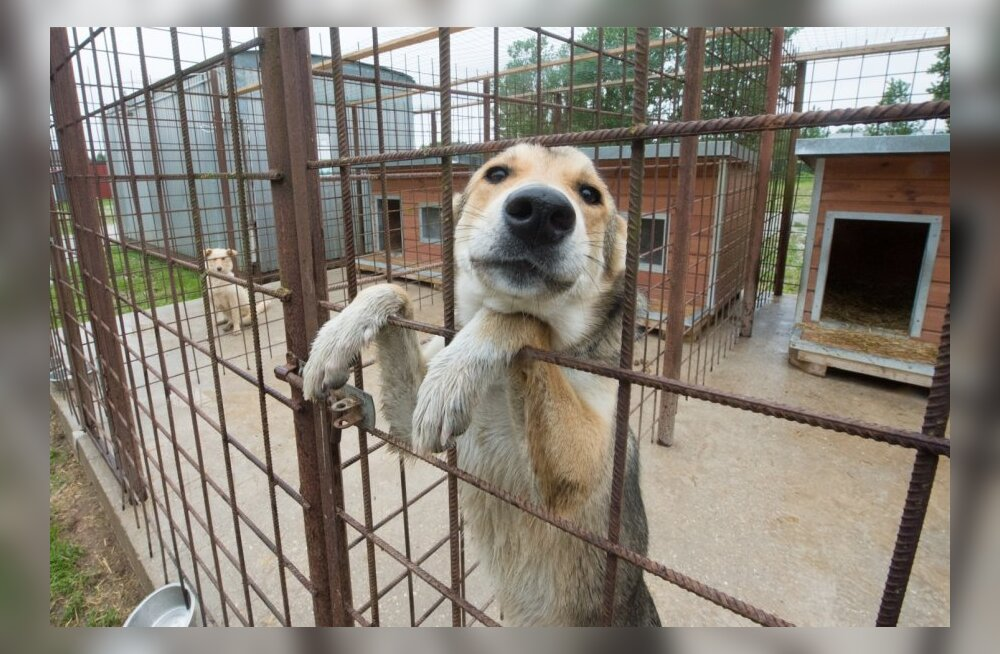 Loomade varjupaik