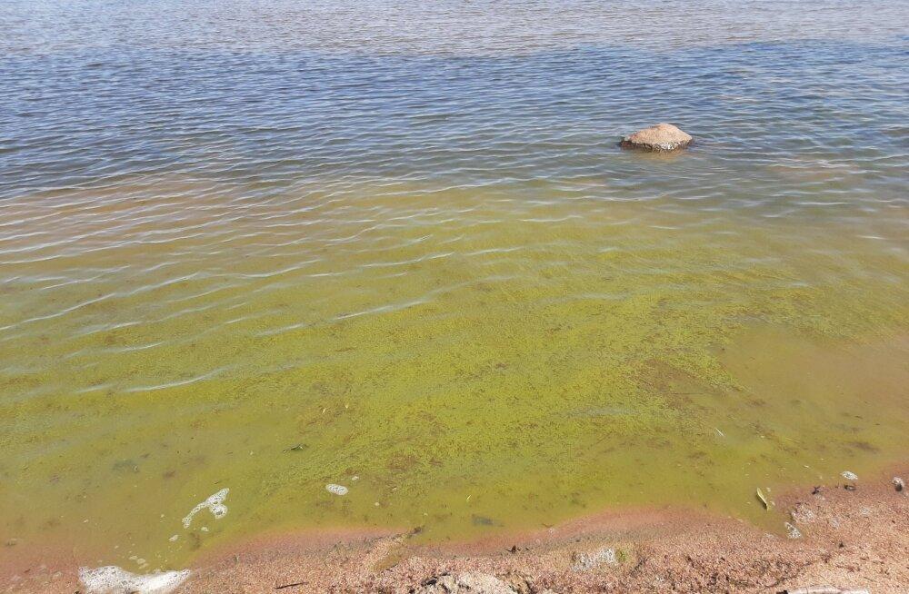 Ettevaatust! Sinivetikaohu tõttu ei ole soovitav Pärnu randades supelda