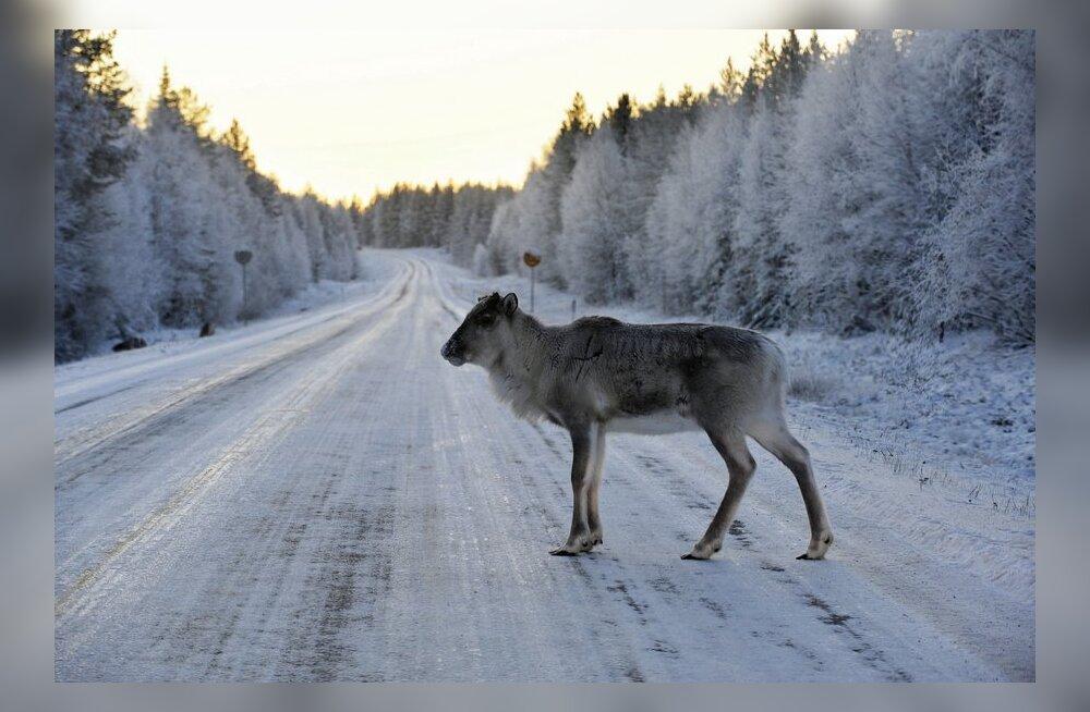 Снегопад и метель в середине лета удивили жителей Финляндии