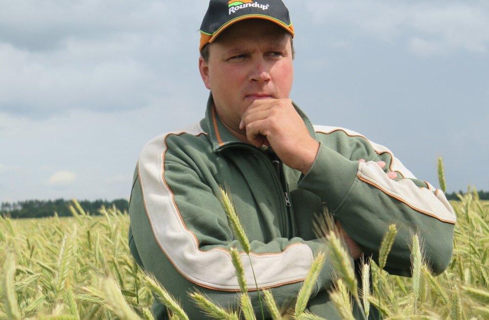 Tänavu sündis uus rukkirekord: Jõgevamaa mees Tanel Tõrvand sai saagiks 10,3 tonni hektarilt.