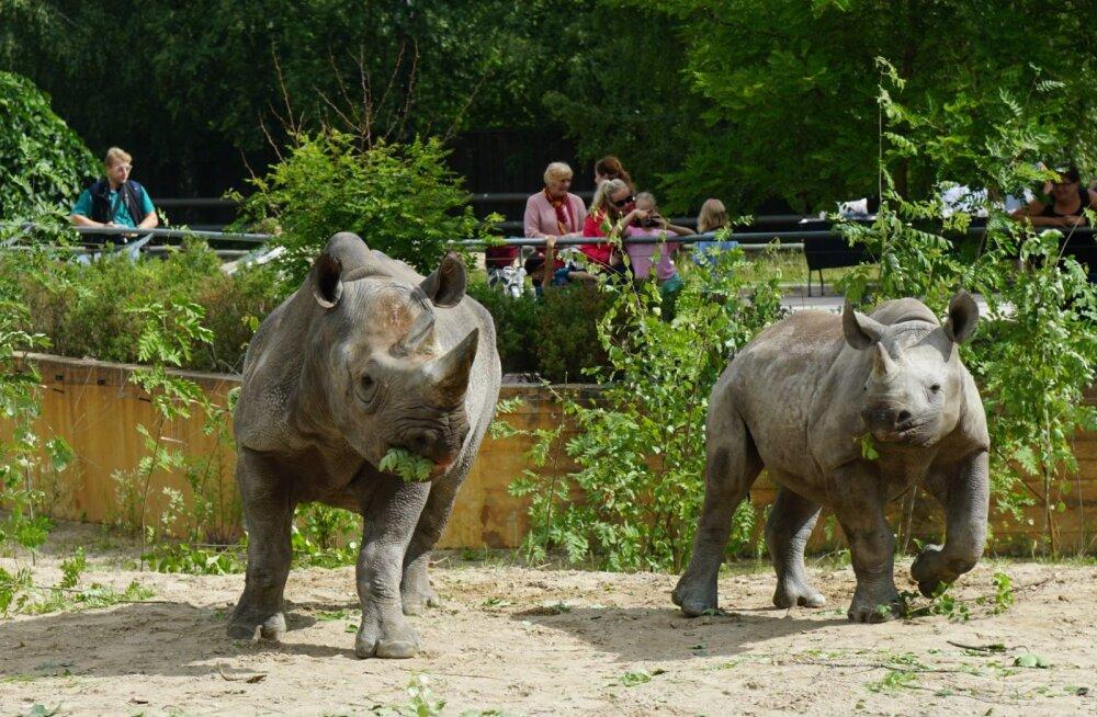 ÜRITUS   Loomaaias tuleb suurejooneline lastekaitsepäev