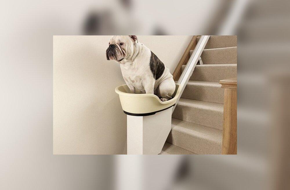 Kuidas ülekaalulise lemmiklooma jalavaeva vähendada