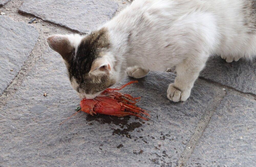 Maltal elavad ka kassid luksuses