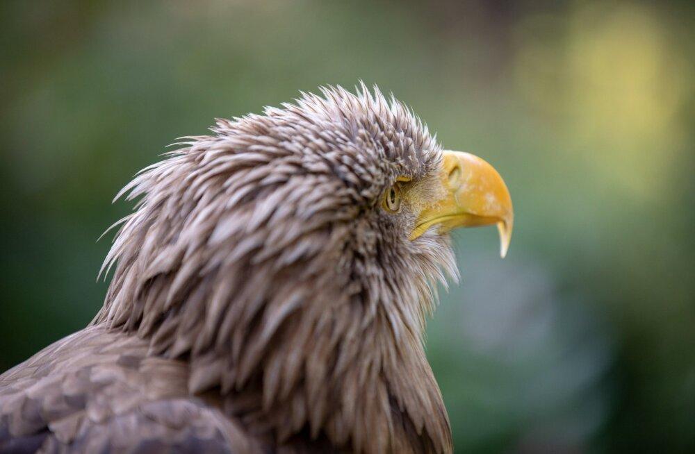 ÜRITUS | Tallinna loomaaias räägitakse Teadlaste Ööl loomade heaolust