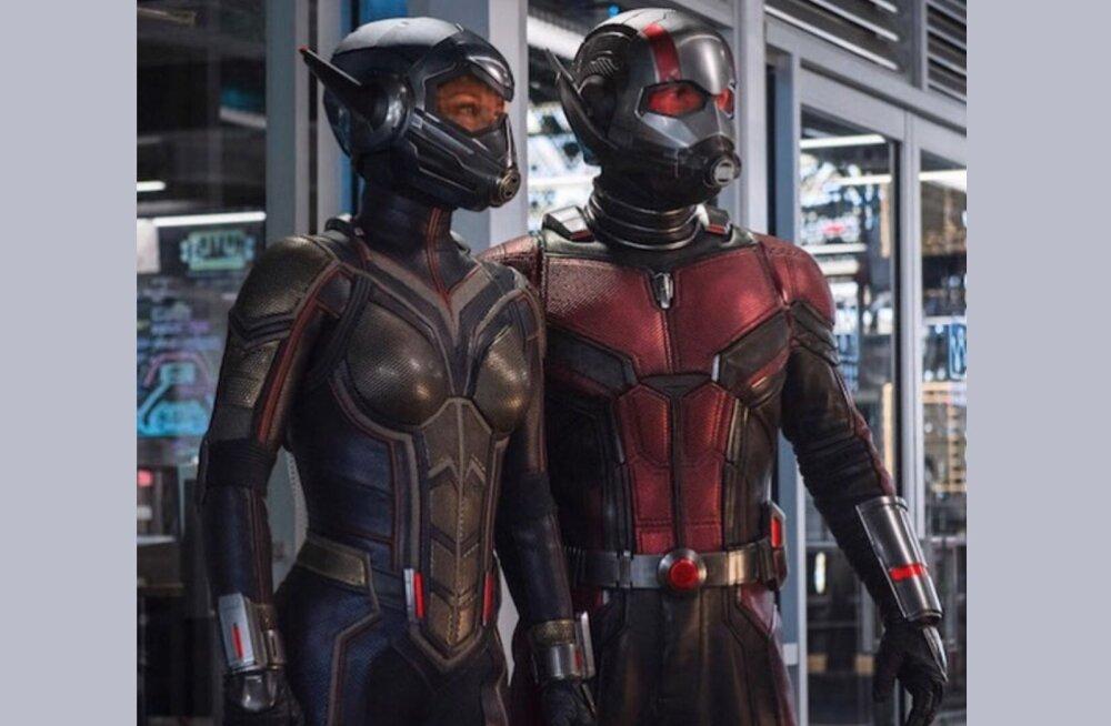 SKANDAAL | Kas Sipelgamehe uueks filmipartneriks on Herilane või hoopis... Nokutüdruk?