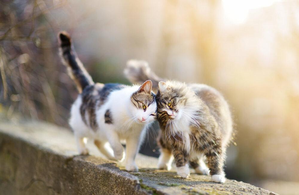 Sa tegid head! Septembrikuus leidis uue kodu üle poolesaja abivajava kassi