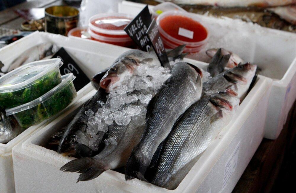 Saaremaale plaanitakse Eesti suurimat kalakasvandust