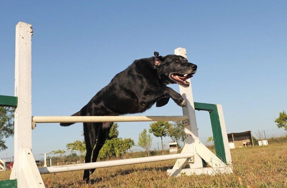 Uued avastused - eakas koer vajab kookosõli
