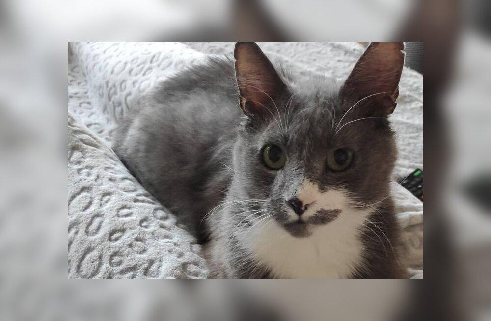 Loomaarst leidis kassi koljust seal pikka aega olnud kuulid