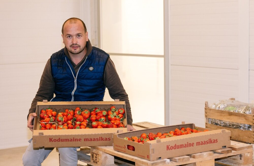 AranFarmingu ilusad suured maasikad on Eestis kasvatatud, kinnitab Paavo Otsus.