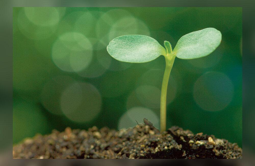 Taimede toitumine kui suur pusle