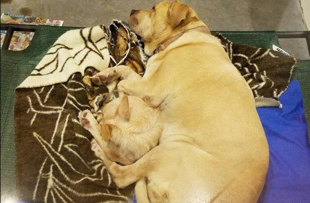 Haruldane sõprusside: varjupaiga koer liimis end südamesõbra külge veendumaks, et nad üheskoos kodu leiaks
