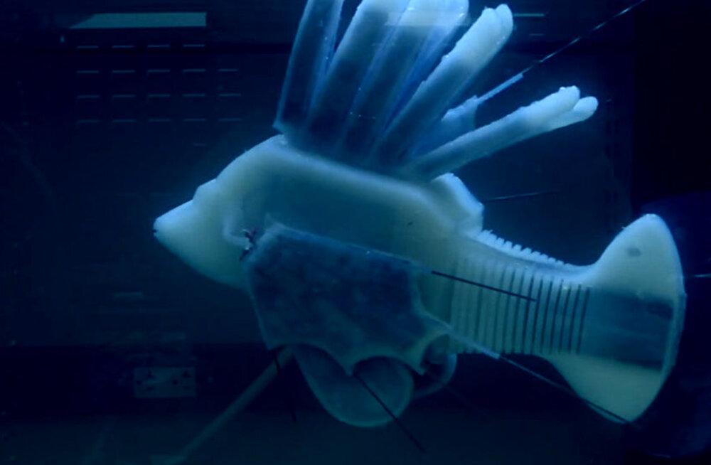 Tehisverega robotkala suudab ujuda 36 tundi