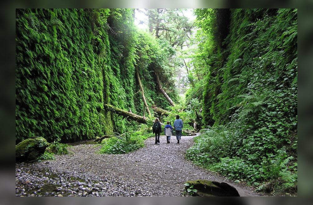 Redwoodi rahvuspark - pikk lugu pikkadest puudest