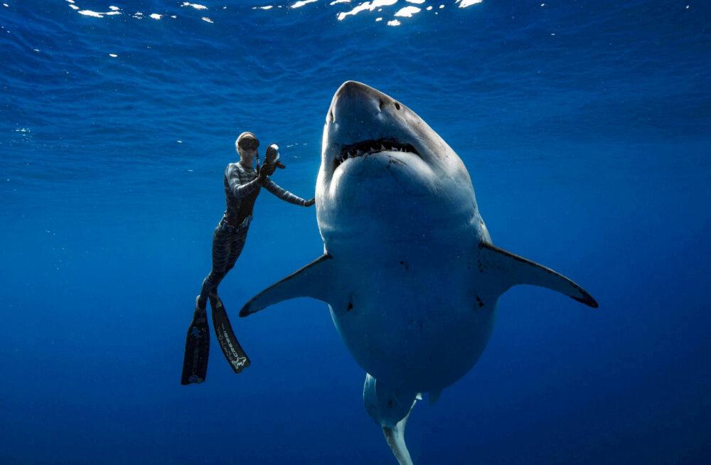 ВИДЕО: На Гавайях засняли самую крупную акулу в истории