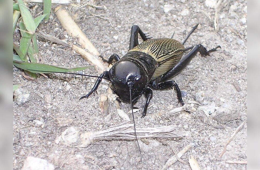 Putukatel võib olla iseloom