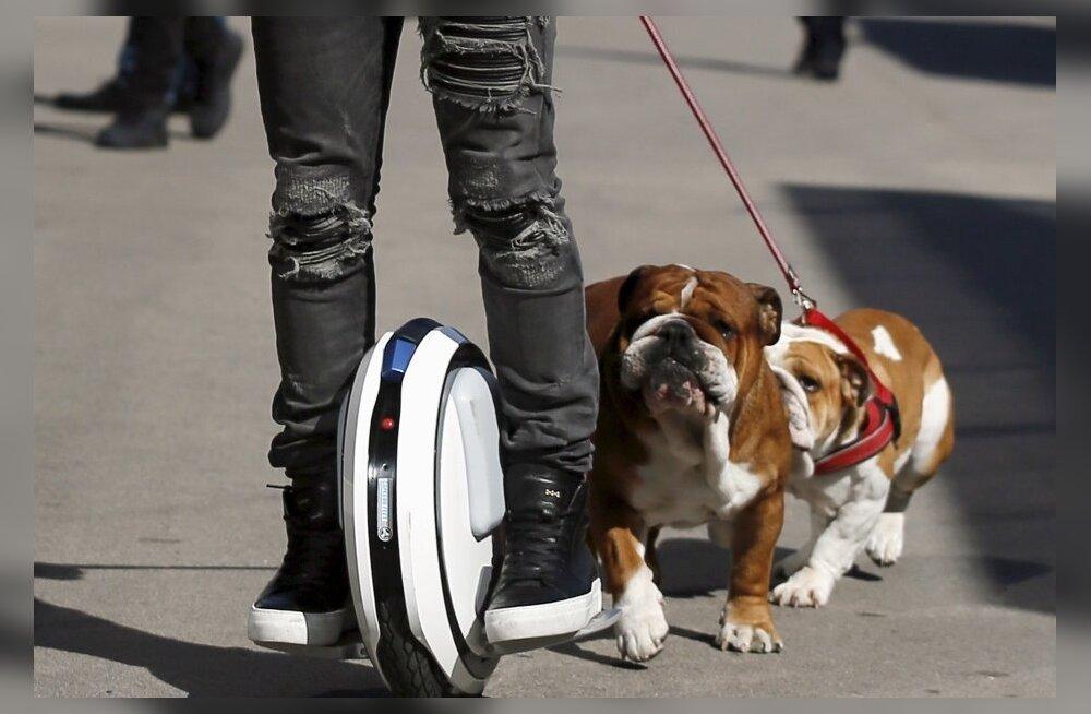 Lewis Hamilton ja tema kuulsad koerad