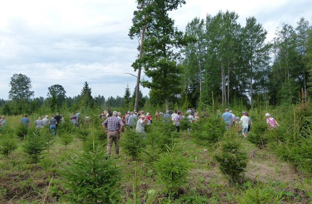 Ülesanne on järgmine: kas süsinikku seob aktiivsemalt metsakultuur või taamal näha olev mets?