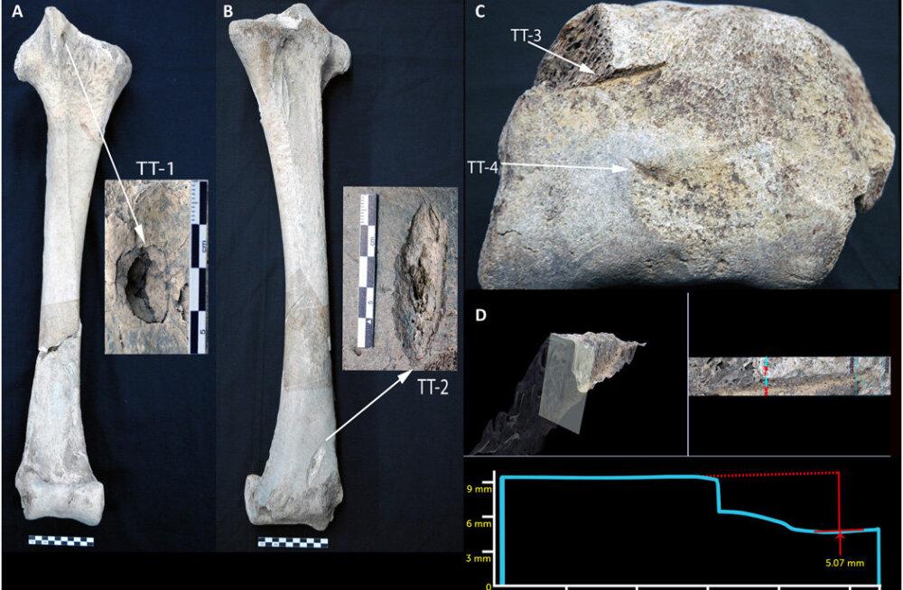 Madagaskari inimesed küttisid tuhandeid aastaid hiidlinde, kes kaalusid kuni pool tonni