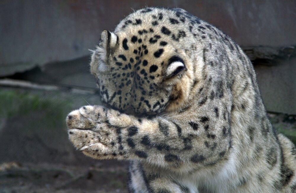 Loomaaias saab augustis näha Klassikakolmapäevade kontserte ja piiluda, mida teevad loomad videviku ajal