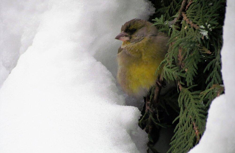 Leili metsalood | Lumi, linnud ja katused