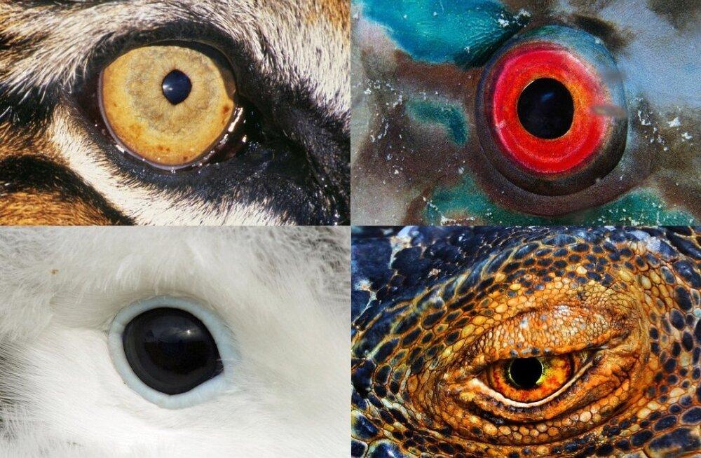 Üle keskmise terav pilk: inimesed pole loomariigi kontekstis sugugi halvad nägijad