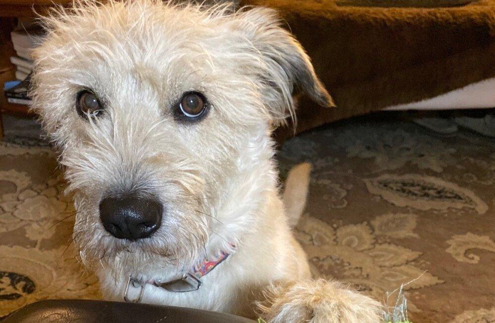 Пробирает до слез: Пес погиб, спасая хозяина из пожара