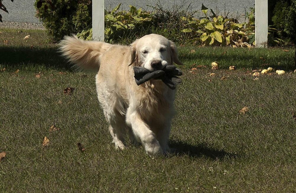 10 võimalikku viga, mida tuleb koera treenides silmas pidada ja kindlasti vältida