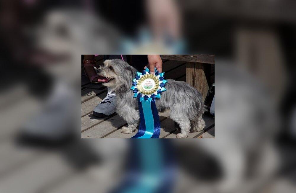 FOTOD: Paides valiti kauneim koer