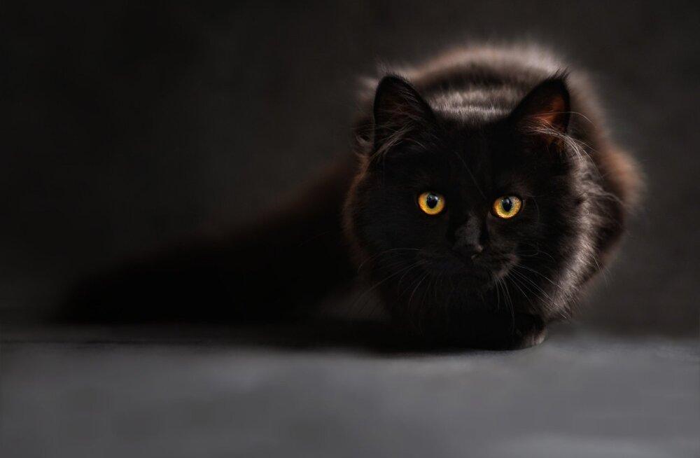 Miks vihati Lääne-Euroopas keskajal kasse?