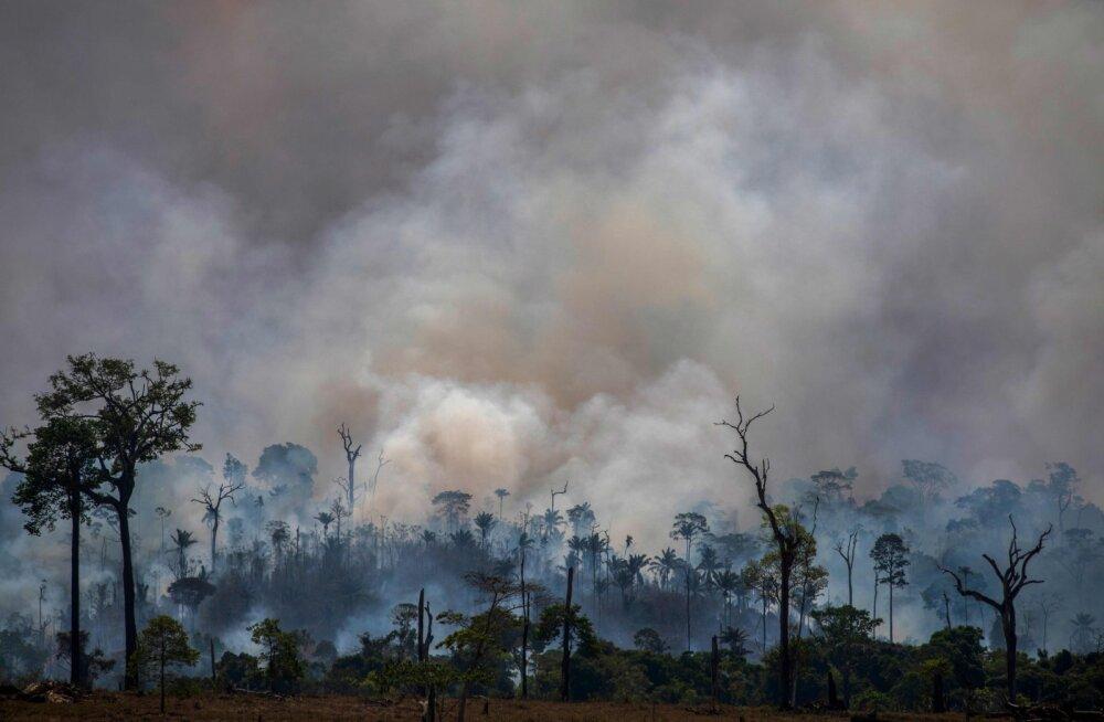 Brasiilia keelas 60 päevaks tule tegemise maa metsast puhastamiseks