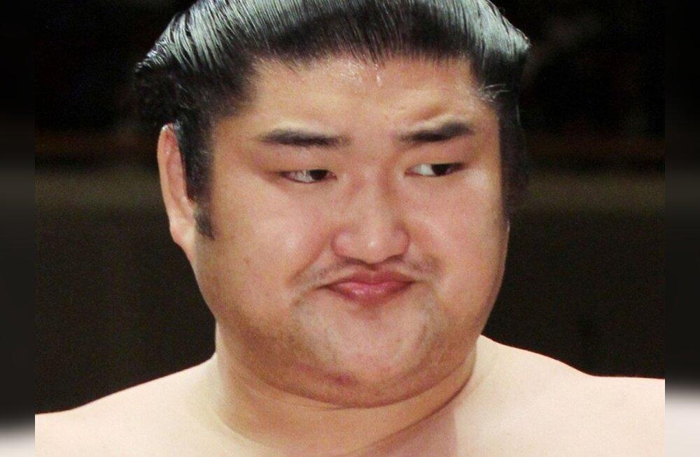 ozeki Kotomitsuki, sumo