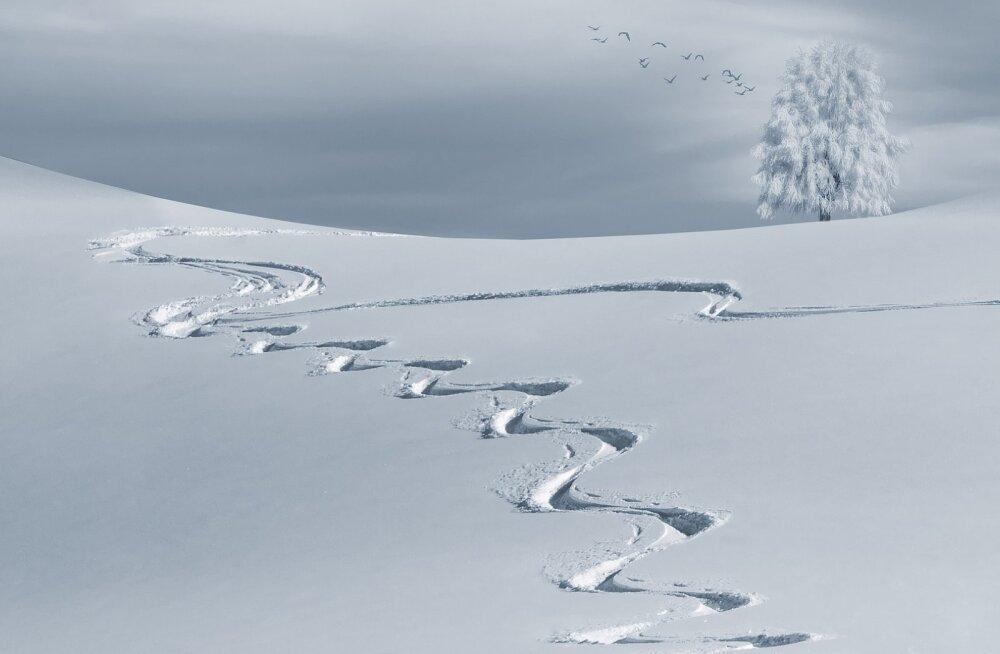 Naudi talveilus Eesti loodust: vahvad ideed, kus ja kuidas seda teha