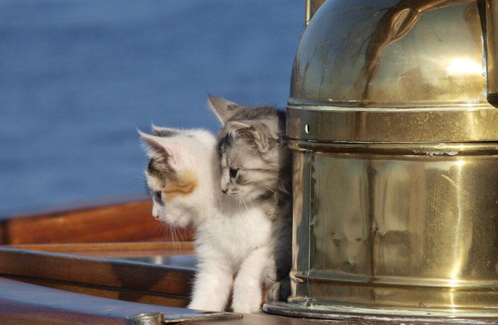 Eesti laevakassid Lonni ja Morris armastavad merd, kuid ei ütle ära ka seiklustest kuival maal