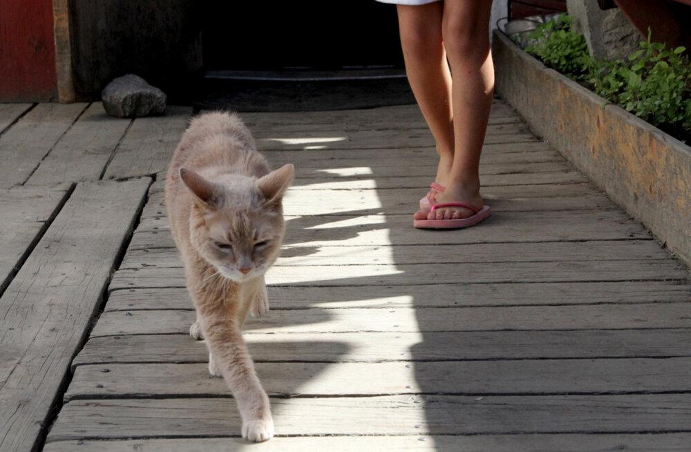 Ligi kaks kümnendit USA linna juhtinud kass suri