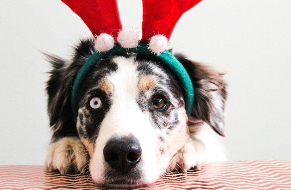 TOP 8 | Ammuta inspiratsiooni! Need on parimad jõulukingid koertele